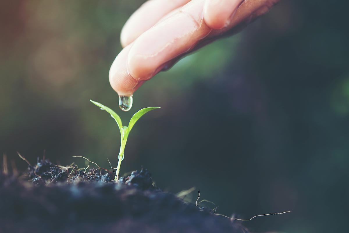 Plantas medicinales para la ansiedad y estrés