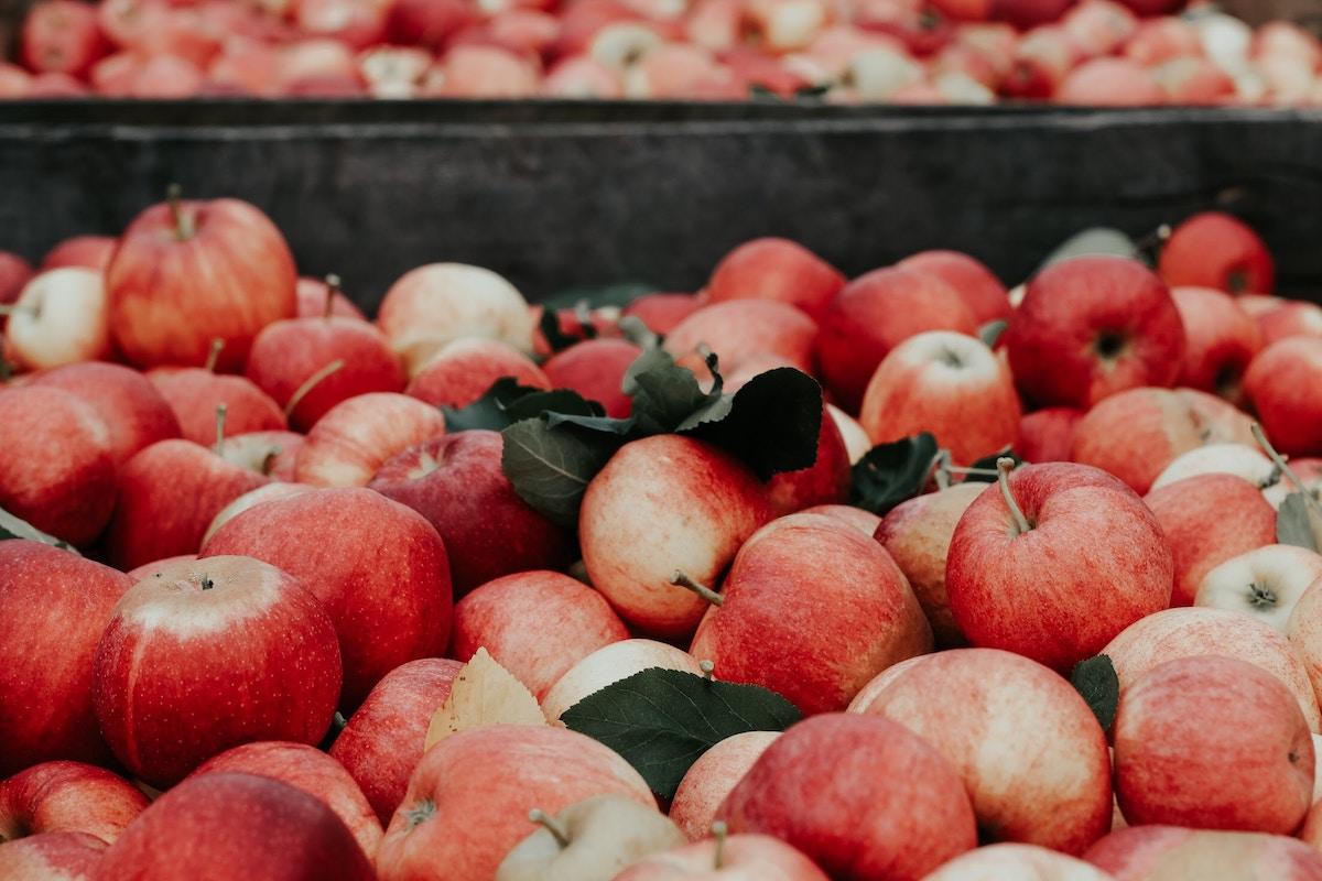 manzana otoño