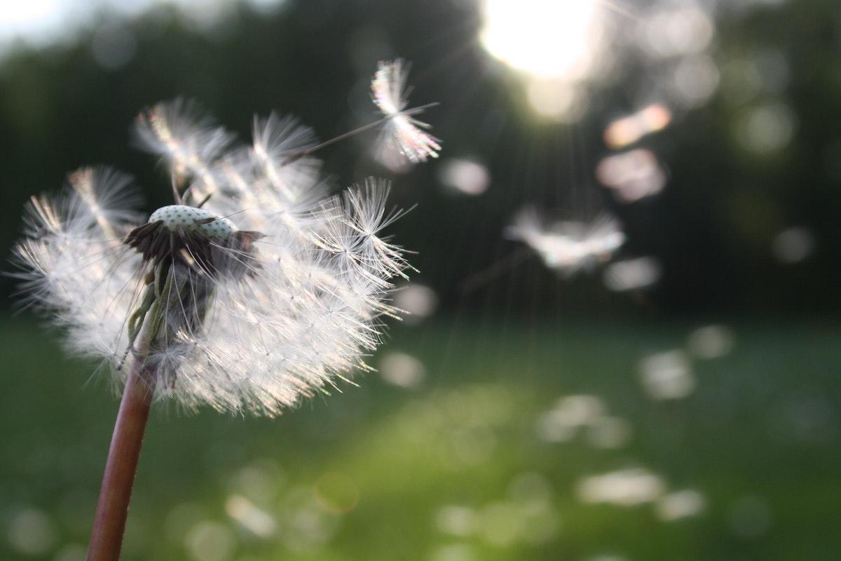 polen y alergia estacional